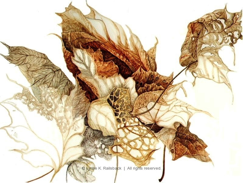 """Maple Leaf Lace"", Acer rubrum, 2000, 13""w x 13""h"