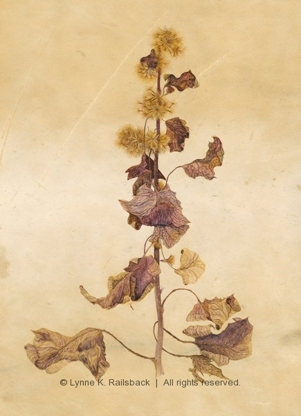 """Lions Foot"", <em>Prenanthes alba</em>, 2013, 10.5""w x13.5""h (on deer vellum)"